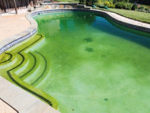 Treat a green pool